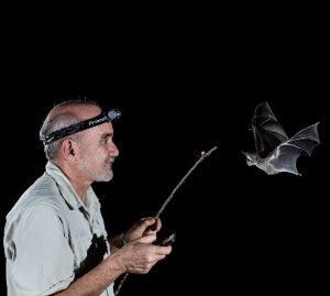 The Truth about Bats and COVID-19