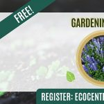 Gardening Basics by Eco Centro