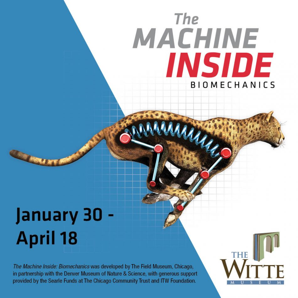 The Machine Inside: Biomechanics