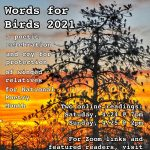 Words for Birds: Sunday Reading