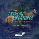 Extreme Creatures: Life at the Limits