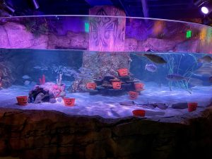 SEA LIFE San Antonio Fish-or-Treat